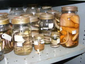 Livingstone Museum collections - Herpetology Section